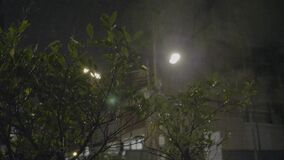 Tropical Rain Pours at Night. Strong winds and rain shook the trees in dark night. Tropical rain falling on tree leaves and asphalt road, peaceful nature stock footage