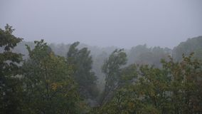 Strong winds and rain shook trees. Strong winds and rain shook the trees stock video footage