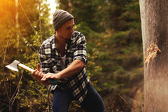 Strong woodcutter chopping wood in the forest. Sunlight effect royalty free stock photo
