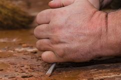 Strong working hands doing repairs. In the hands of a screwdriver. We rip off the paint off the floor stock photo