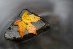A steady rock helps a single fall leaf stand against the backwash. Stronger together or nothing is impossible concept. A steady rock helps a single fall leaf royalty free stock photo