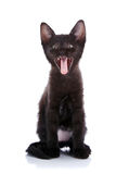 Strongly surprised black kitten. Stock Images
