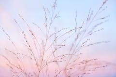 Stronniczo Chmurny Pastelowych menchii i purpur półmroku światło z niebieskim niebem obraz royalty free