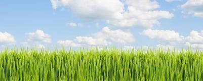 Strook van groen gras tegen blauwe bewolkte hemel Stock Afbeeldingen