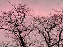 Strook van het silhouet van boomtakken tegen zonsondergangachtergrond van oranje en roze hemel stock foto