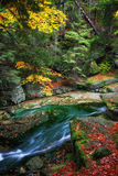 Stroom in Autumn Forest van Karkonosze-Bergen Royalty-vrije Stock Foto