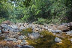 Stroom in de tropische wildernissen royalty-vrije stock foto's
