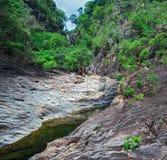 Stroom in de tropische wildernissen stock afbeeldingen