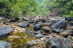 Stroom in de tropische wildernissen stock foto