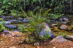 Stroom in de tropische wildernissen van Koh C van Thailand van Zuidoost-Azië stock foto
