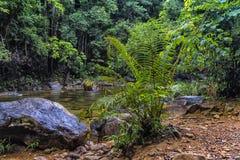 Stroom in de tropische wildernissen van Koh C van Thailand van Zuidoost-Azië stock fotografie