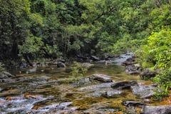 Stroom in de tropische wildernissen van Koh C van Thailand van Zuidoost-Azië royalty-vrije stock afbeelding