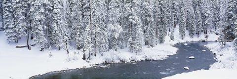 Stroom in de winter stock afbeeldingen