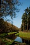 Stroom door een bos stock afbeelding