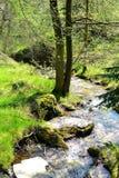 Stroom in Engels platteland Stock Afbeeldingen