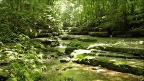 Stroom in het bos stock videobeelden