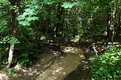 Stroom in het bos op een warme zonnige dag stock foto