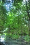 Stroom in het groene bos Royalty-vrije Stock Afbeelding