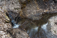 Stroom in het ravijn De natuurlijke lente in het wilde bos Stock Foto's