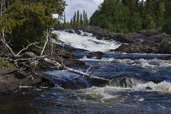 Stroom met stroomversnelling en een dode boom in het water Stock Afbeeldingen