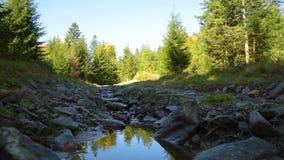 Stroom op bosweg stock footage