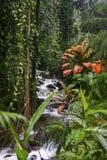 Stroom op het Grote Eiland Hawaï Stock Foto