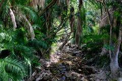 Stroom in regenwoud stock fotografie