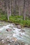 Stroom Studeny potok in Hoge Tatras, Slowakije royalty-vrije stock foto's