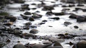 Stroom van rivier stock videobeelden