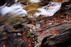 Stroom van rode esdoornbladeren stock afbeelding