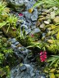 Stroom van water met roze bloemen vooraan royalty-vrije stock afbeeldingen