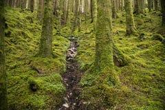 Stroom in wild bos in Schotland Stock Foto