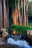 Stroom in zonsondergang stock afbeelding
