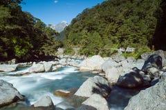 Stroomkreek in een bergbos, Nieuw Zeeland Stock Foto