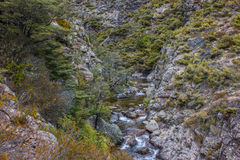 Stroomversnelling in Inheemse Bush-bergstroom Royalty-vrije Stock Afbeelding