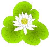 Stroomversnelling Lilly Lotus Leaves royalty-vrije illustratie