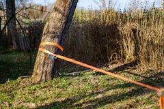 strope para caminar de alambre estirado entre los árboles foto de archivo