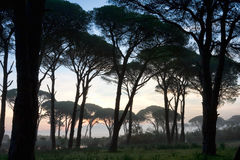 Strophylia forest at sunrise Royalty Free Stock Photos