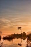 Strophylia forest at sunrise stock images