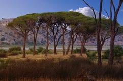 Strophylia Wald in Kalogria lizenzfreie stockfotografie