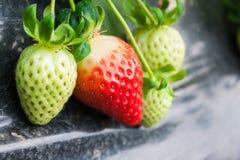 Strowberry Стоковое Изображение