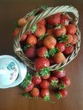 Strowberry stilleben royaltyfri bild