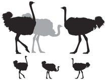Struś grupowa sylwetka ilustracji