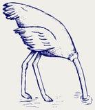 Struś zakopuje swój głowę w piasku royalty ilustracja