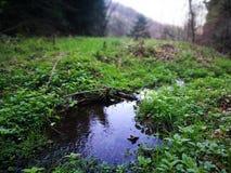 Strużka woda Fotografia Royalty Free