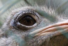 Struś w Krajowym zoo Zdjęcie Stock