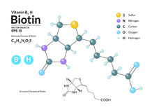 Structural chemical molecular formula and model of Biotin. Atoms are represented as spheres with color coding. On background. 2d, 3d visualization and skeletal Stock Photo