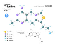 Structural chemical molecular formula and model of thiamine. Atoms are represented as spheres with color coding. Isolated on background. 2d or 3d visualization Stock Images