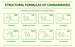 Structural Formulas of main natural cannabinoids horizontal infographic stock illustration