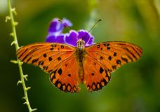 Structure. Orange butterfly with open wings Stock Image